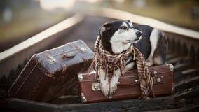 Der Hund liegt auf Koffern auf Schienen Lizenzfreies Stockfoto