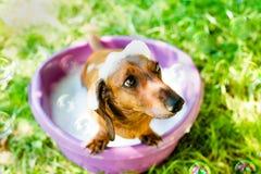 Der Hund nimmt ein Bad Stockfoto