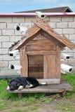 Der Hund schützt das Haus wird ausgerüstet mit Überwachungskameras Stockfotografie