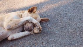 Der Hund schläft auf der Straße, der Hund sich versteckt Lizenzfreie Stockfotografie