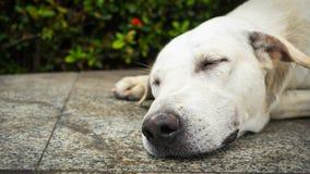Der Hund schläft auf Zementhintergrund, der Hund schläft an Stockfoto