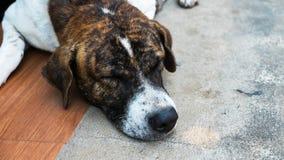 Der Hund schläft auf Zementhintergrund, der Hund schläft an Stockbild