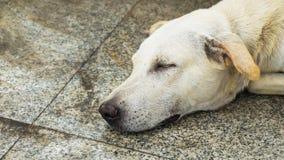 Der Hund schläft auf Zementhintergrund, der Hund schläft an Stockfotos