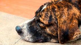 Der Hund schläft auf Zementhintergrund, der Hund schläft an Lizenzfreie Stockfotos
