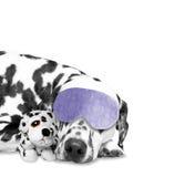 Der Hund schläft mit seinem Lieblingsspielzeug Lizenzfreie Stockbilder