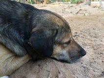 Der Hund schlief an einem heißen Tag Lizenzfreie Stockbilder
