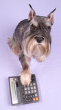Der Hund sitzt lizenzfreies stockbild