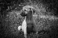 Der Hund sitzt auf dem Gras und den Blicken an der Welt hinter dem Zaun stockfoto