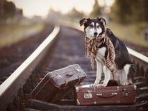 Der Hund sitzt auf einem Koffer auf Schienen Lizenzfreie Stockbilder