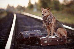 Der Hund sitzt auf einem Koffer auf Schienen Stockfotografie