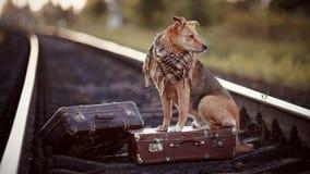 Der Hund sitzt auf einem Koffer auf Schienen Lizenzfreie Stockfotos