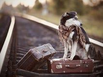 Der Hund sitzt auf einem Koffer auf Schienen Stockfoto