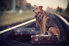 Der Hund sitzt auf einem Koffer auf Schienen Stockbild