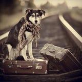 Der Hund sitzt auf einem Koffer auf Schienen Stockfotos
