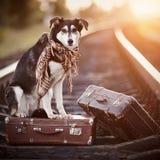 Der Hund sitzt auf einem Koffer auf Schienen Lizenzfreies Stockbild