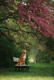 Der Hund sitzt auf einer Bank im Park nahe dem Rosenholz lizenzfreies stockfoto
