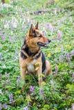 Der Hund sitzt im Wald auf einem Rasen mitten in Frühling flowers_ stockbild