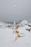 Der Hund springend nach einem Schneeball lizenzfreie stockbilder