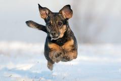 Der Hund springend in Schnee Lizenzfreie Stockfotos