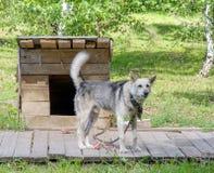 Der Hund steht nahe der Kabine Stockbilder