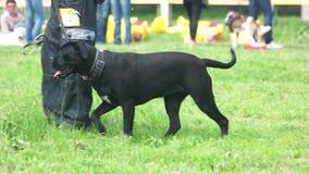 Der Hund tut sitzende Übungen stock footage