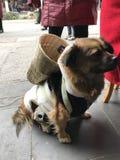 Der Hund und der Korb Lizenzfreies Stockfoto