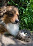 Der Hund und ein Nest Stockfotografie