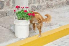 Der Hund uriniert auf der Straße, auf einem Topf Blumen lizenzfreies stockfoto
