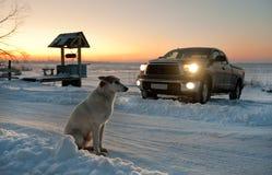 Der Hund wartet an der Straße. Stockbild