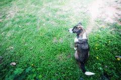 Der Hund wartet stockfotografie
