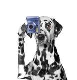 Der Hund wird Fotos von etwas machen Stockfotos