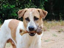 Der Hund, zum im Mund zu halten, entbeinen im Freien Stockbild