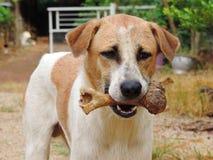 Der Hund, zum im Mund zu halten, entbeinen im Freien Lizenzfreie Stockfotografie