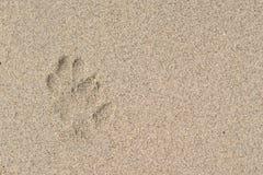 Der Hundeabdruck auf dem Strand Lizenzfreie Stockfotos