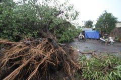 Der Hurrikan Stockfotos