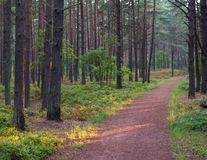 Der idyllische Waldweg morgens stockfotos
