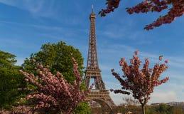 Der ikonenhafte Eiffelturm in Paris an einem sonnigen Frühlingstag hinter Kirschblüten Stockfoto