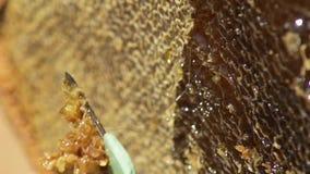 Der Imker öffnet die Bienenwabe Säubert die Honigzelle Makro apiary bienen Langsame Bewegung stock video footage