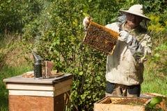 Der Imker betrachtet den Bienenstock Honigsammlung und Bienensteuerung Lizenzfreie Stockfotos