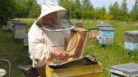 Der Imker in der australischen, kanadischen, europäischen weißen Klage arbeitet mit einem Bienenvolk, Bienen auf einem Bienenhaus stock video