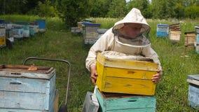 Der Imker in der australischen, kanadischen, europäischen weißen Klage arbeitet mit einem Bienenvolk, Bienen auf einem Bienenhaus stock footage