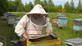 Der Imker in der australischen, kanadischen, europäischen weißen Klage arbeitet mit einem Bienenvolk, Bienen auf einem Bienenhaus stock video footage