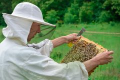 Der Imker hält eine Honigzelle mit Bienen in seinen Händen Bienenzucht apiary lizenzfreie stockfotografie
