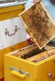 Der Imker hält in der Hand einen Rahmen mit Bienenwaben und Bienen Stockfotos