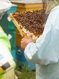 Der Imker hält in der Hand einen Rahmen mit Bienenwaben und Bienen Lizenzfreie Stockbilder