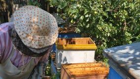 Der Imker hebt den Bienenstock des zweiten Stocks an stock video footage