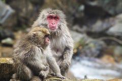 Der japanische Affe, der eine Rückseite in einer heißen Quelle wäscht Lizenzfreies Stockbild