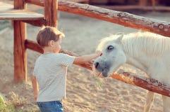 Der Junge auf der Ranch Stockfotos