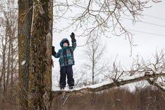 Der Junge auf einem Baum lizenzfreie stockfotos