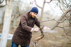 Der junge bärtige Mann sägt trockene Niederlassungen von Obstbäumen Stockfotos